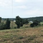 HICKORY COUNTY LAND AUCTION