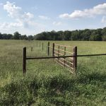 Absolute Greene County Land Auction – 166 Acres